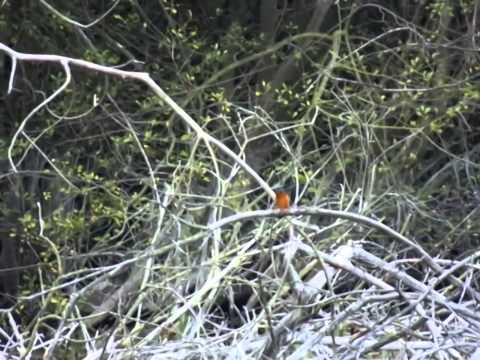 kingfishers at essex wildlife trust chafford gorge slow motion recording fuji finepix hs50exr