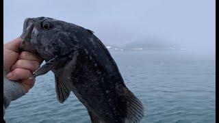 서해 겨울 워킹 우럭낚시 - 대물 출현!