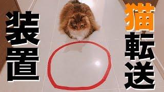 猫転送装置を試してみたら面白いぐらいに・・・!?