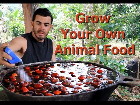 "Grow Your Own Animal Food ""Living Permaculture"" Episode 2 with Brendon McKeon"