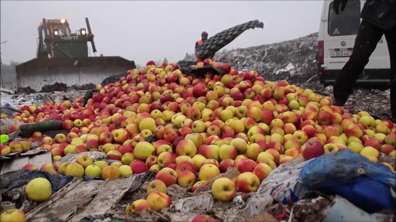 Картинки по запросу уничтожение санкционных продуктов