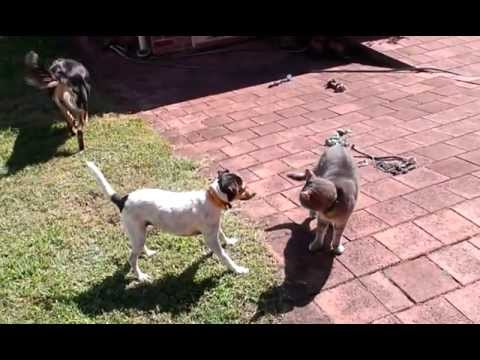 "Cats and Dogs playing together ""Cat vs Dog"""