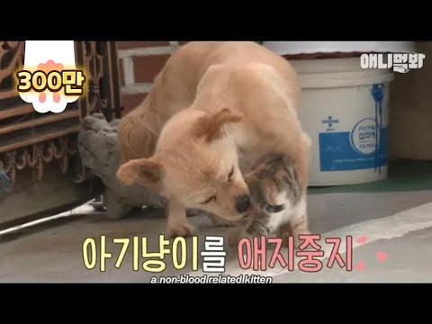 Grandma dog milking and raising cat granddaughter