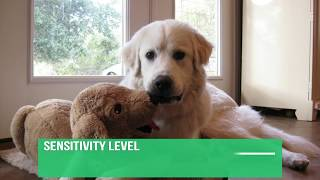 Great Pyrenees Dog Breed Info  Great Pyrenees Facts
