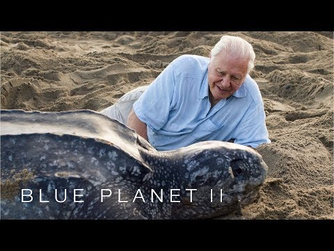 Protecting leatherback turtles - Blue Planet II: Episode 7 Preview - BBC One
