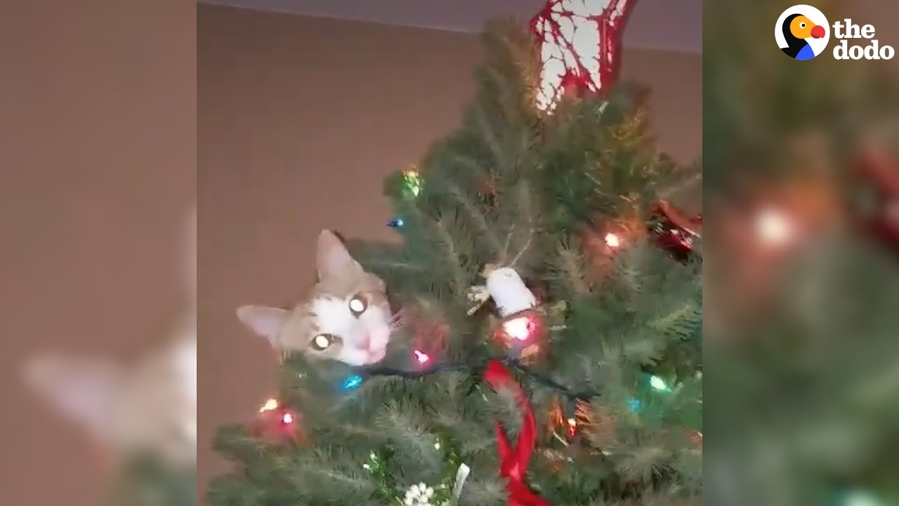 Https Www How To Get Cats Out Of Trees