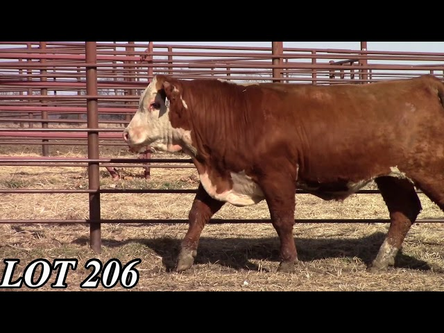 Mead Angus Farms Lot 206