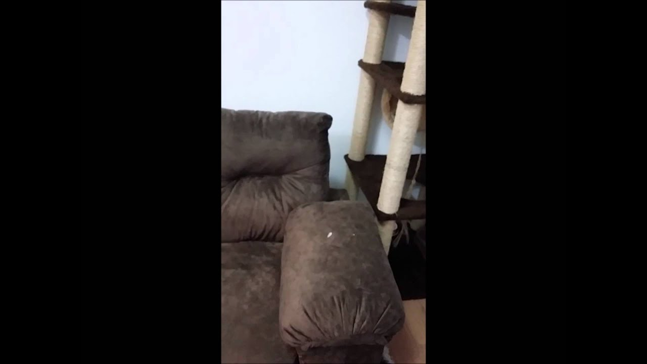 Dr remendo sof rasgo de unha de gato youtube - Sofas para gatos ...