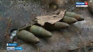 Тұрғыны Магадана кездейсоқ білдім, бұл оның атасы – батыр соғыс Алтай