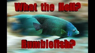 what the hell is rumblefish?