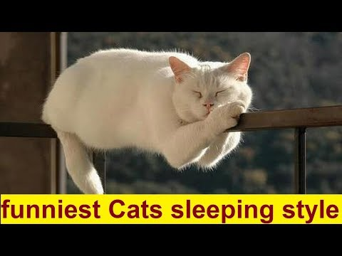 Top 20 Funniest Cats Sleeping Style - Funny Cats Sleeping in Weird Positions Compilation 2017