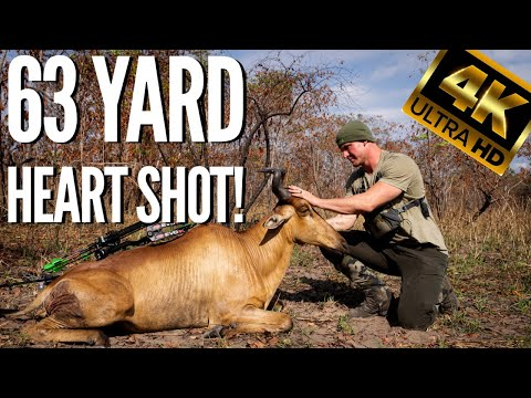 HARTBEEST HEART SHOT! Bowhunting WILD TANZANIA 4K Hunting