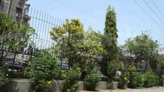Popular Videos - Dwarka, Delhi & Apartment
