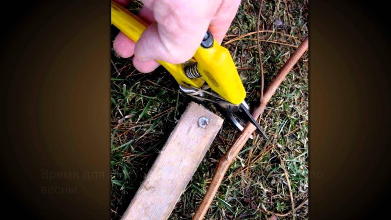 Nails: гель-лаки MiMishka | nude rubber base BDnails - YouTube