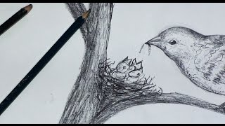 How to draw ,  birds nest step by step - Pencil sketch