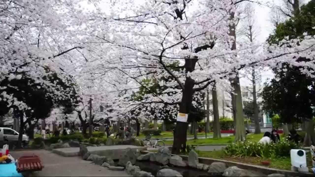 都立東綾瀬公園で花見 Tokyo Metropolitan Higashi-Ayase Park