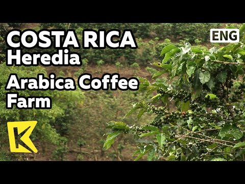 【K】Costa Rica Travel-Heredia[코스타리카 여행-에레디아]아라비카 커피 농장 투어/Britt Coffee Farm Tour/Arabica/Espresso