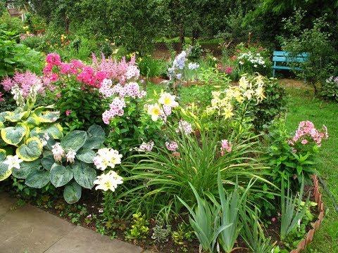 Растения для теневого сада