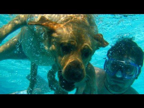 Dog Swimming Underwater! (6.11.09 - Day 42)