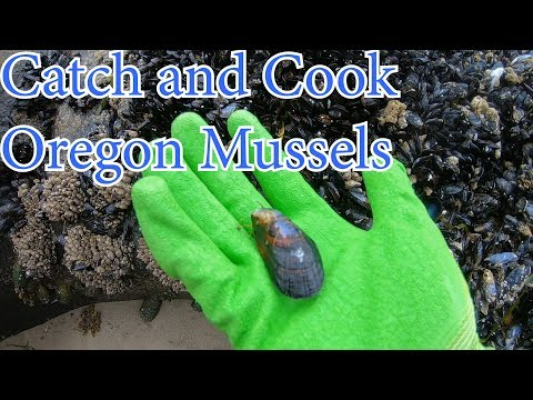 Catch And Cook Oregon Mussels
