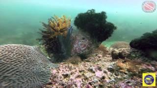 Дайвинг путешествие по Арабским эмиратам | Diving trip to United Arab Emirates
