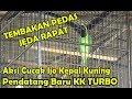 Lomba Burung Chkk Aksi Histeris Cucak Ijo Kepala Kuning Tembak Isian Pedas Chkk Turbo  Mp3 - Mp4 Download