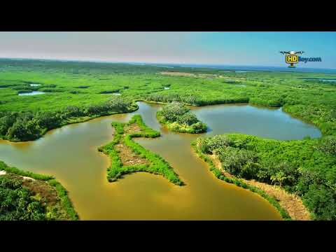 Fly Yuneec Typhoon H over the Florida tropical forest