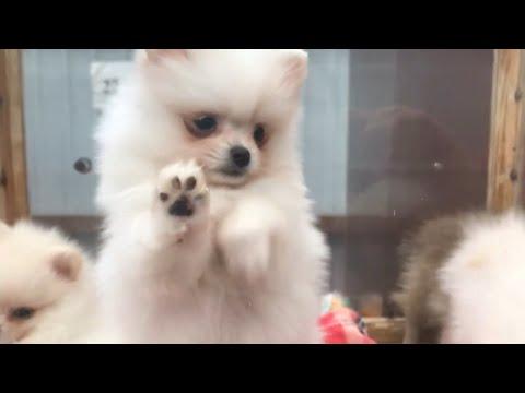 Щенята на Птичьем Рынке в Москве / Можно ли покупать собак на Садоводе?
