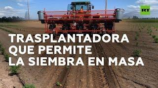 Máquinas para la plantación en masa I RT Play