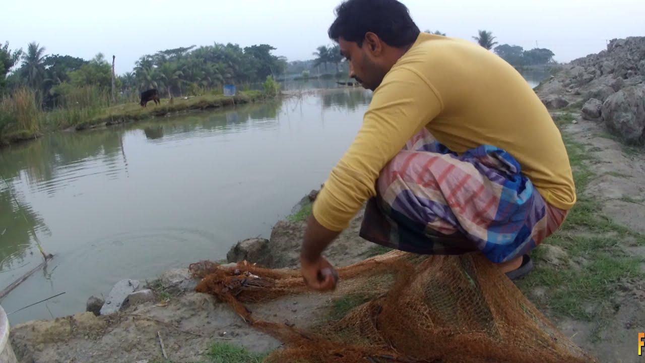 2 Big Galda chingri Fish Catching Videos