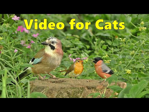 BEST Videos for Cats to Watch ~ Birds and Bird Sounds Spectacular 8 HOURS ⭐