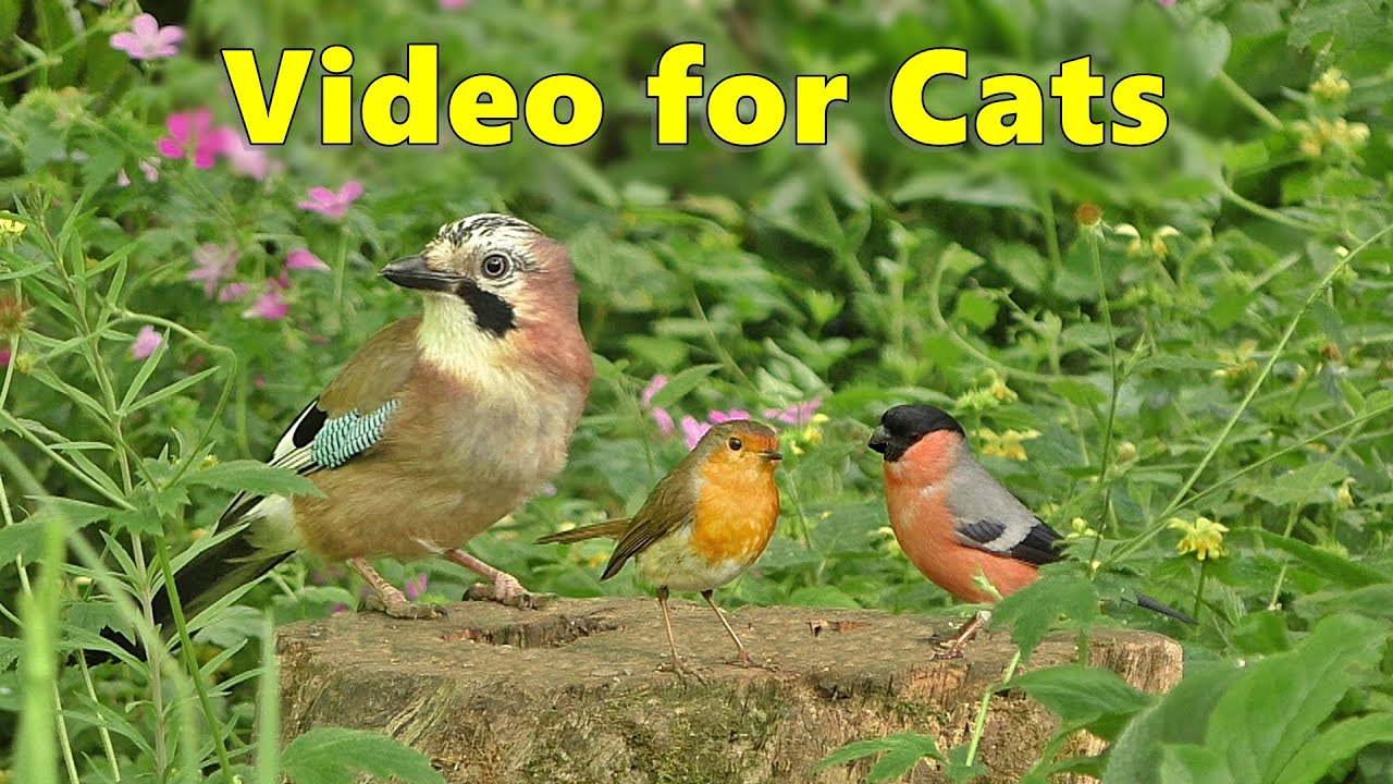 Download BEST Videos for Cats to Watch ~ Birds and Bird Sounds Spectacular 8 HOURS ⭐