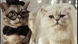 Каким будет жених или невеста :) Гадание на картах Ленорман