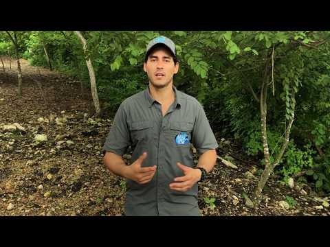 Juan de Dios Morales; fundador de The Wild GYE Initiative