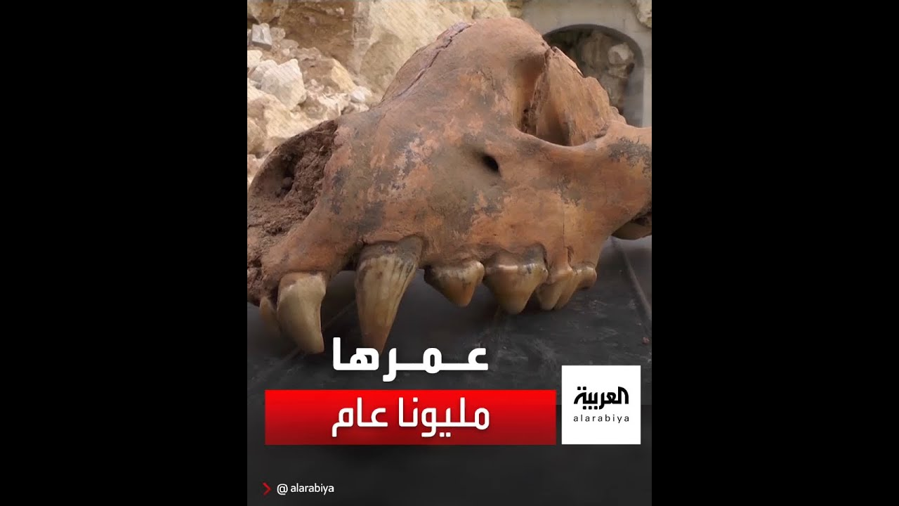 اكتشاف جمجمة ضبع عملاق في شبه جزيرة القرم، ويعتقد العلماء أنه عاش بالمنطقة منذ أكثر من مليوني عام  - نشر قبل 3 ساعة