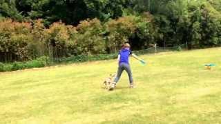 Italian Greyhound 福縷  Flying Disc Dog Training