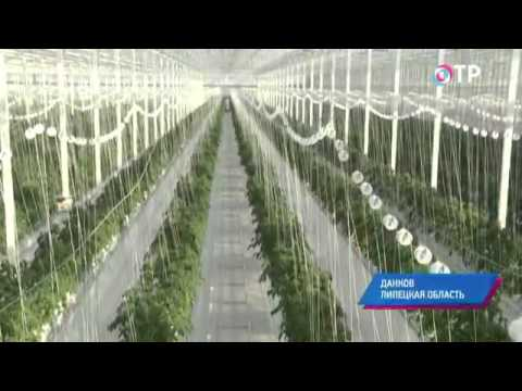 Малые города России: Данков - здесь овощи растут без земли, а опыляют их шмели из Голландии