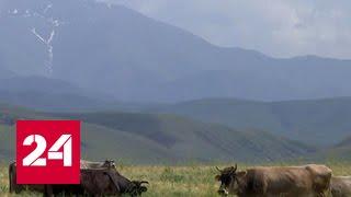 Киргизия выходит на единый евразийский рынок