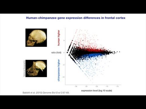 CARTA: Culture-Gene Interactions: Gregory Wray-Genomic Basis for Dietary Shifts