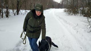Прогулка с собакой по лесу