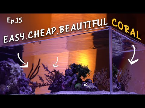 Easy Corals To Start With Huge Aquascape Impact | Ep.15 Nano Reef Competition