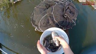 집 연못에서 떡붕어 잡아 임신한 길냥이 밥주기