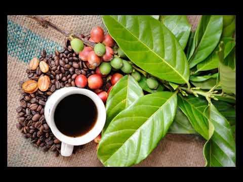 Черный кофе - польза и вред / кому нельзя пить кофе
