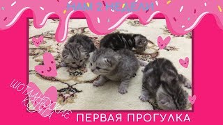 Котятам 2 недели #14 дней#