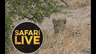 safariLIVE - Sunrise Safari - June 29, 2018 thumbnail