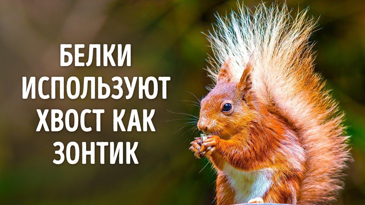 50 Фактов о Животных, Которые Растопят Любое Сердце
