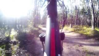 QStar RS9 General 1920x1080-30, лес, против солнца