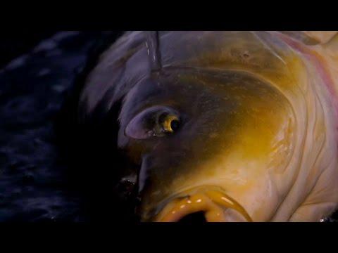 K-Karp - Carp Fishing TV - L'oro di Bolsena - YouTube
