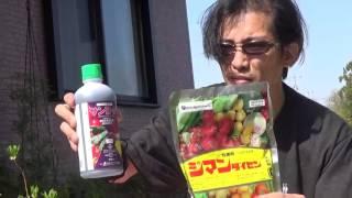 04バラの殺菌剤について&薬剤のローテーション散布について