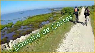 Audenge - Domaine de Certes à VTT ( Bassin d'Arcachon )